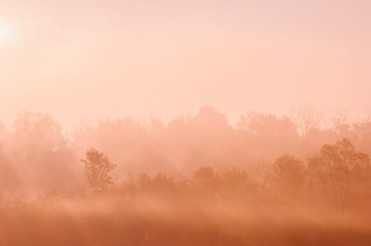krajobraz drzew wśród mgieł