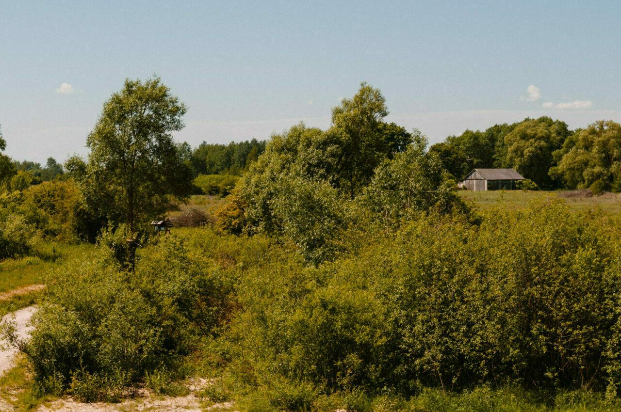 leśny krajobraz poleskiego parku narodowego
