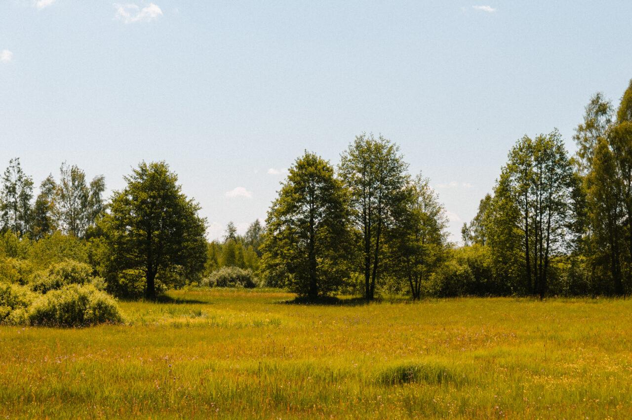 bagienny krajobraz polesia