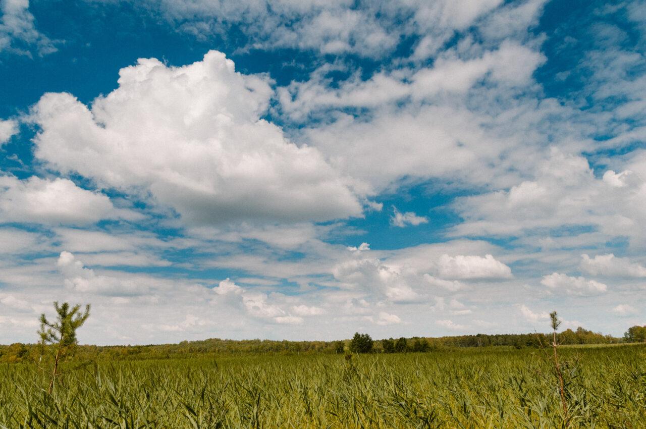 krajobraz poleskich bagien i błękitu nieba