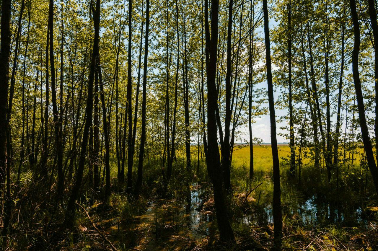 krajobraz poleskich bagien
