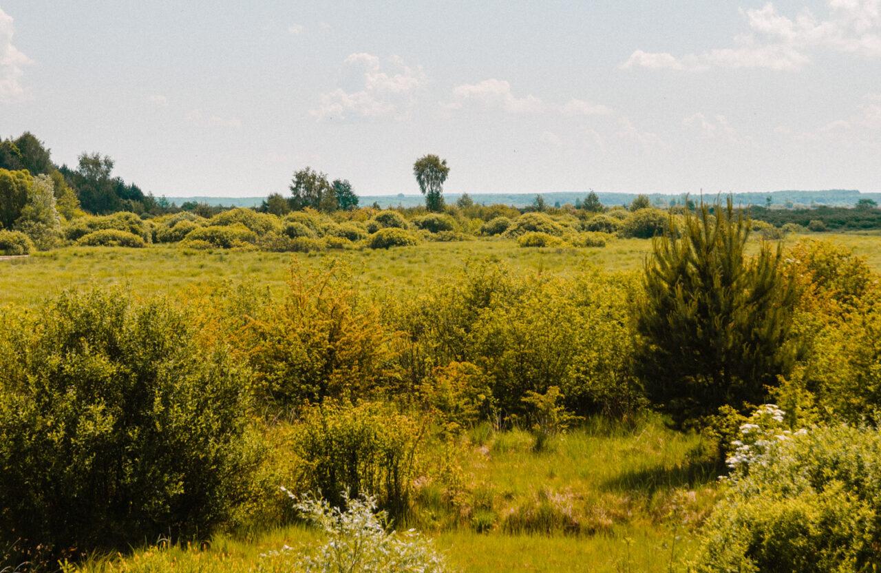 krajobraz w poleskim parku narodowym
