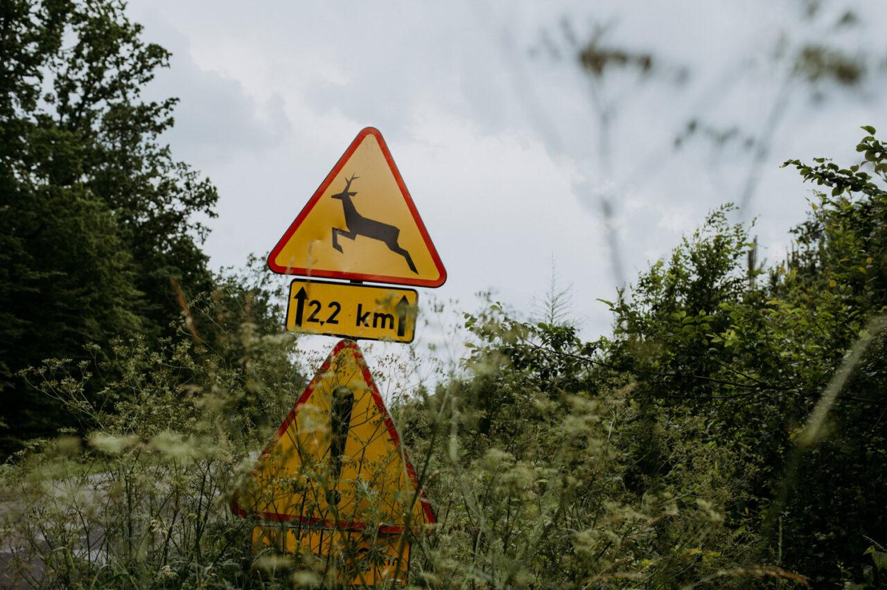 znak drogowy uwaga na dzikie zwierzęta