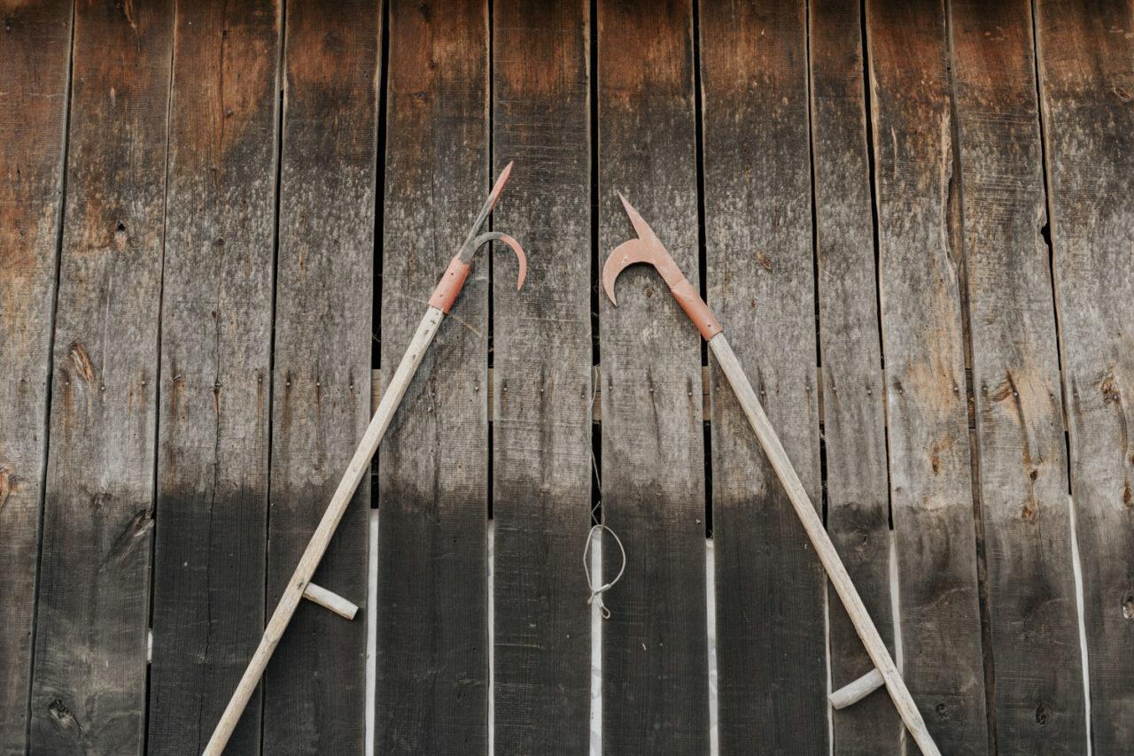 dwa stylowe bosaki na tle drzwi drewnianych
