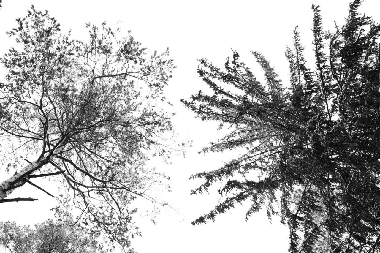 widok na drzewa z żabiej perspektywy