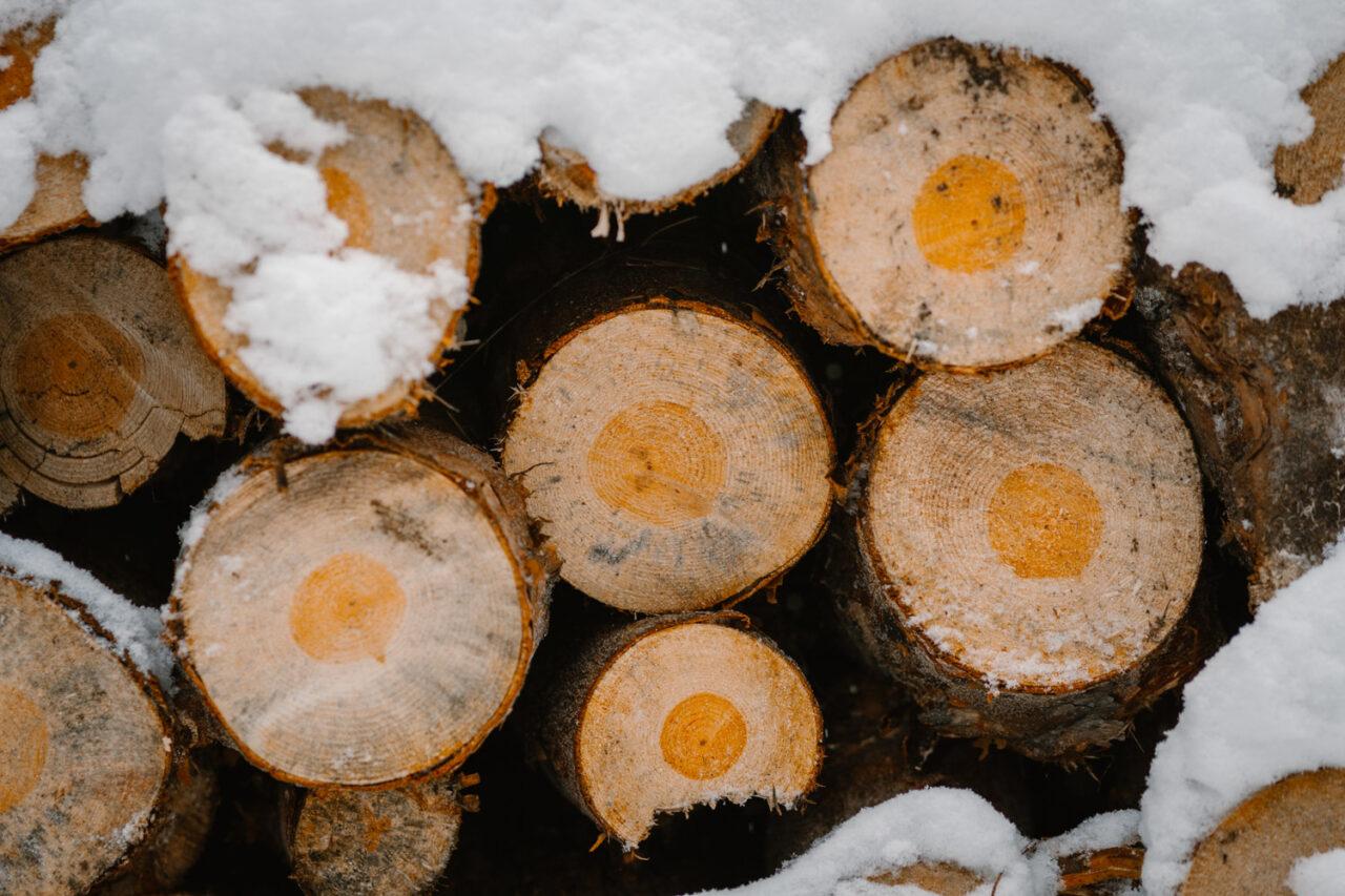 zaśnieżone kawałki ściętych drzew