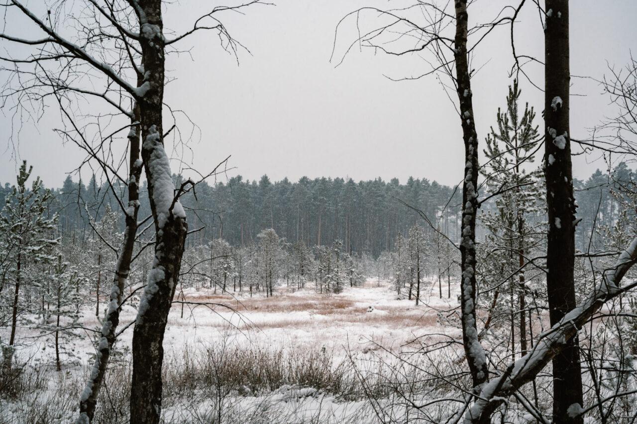 krajobraz bagienny zimą
