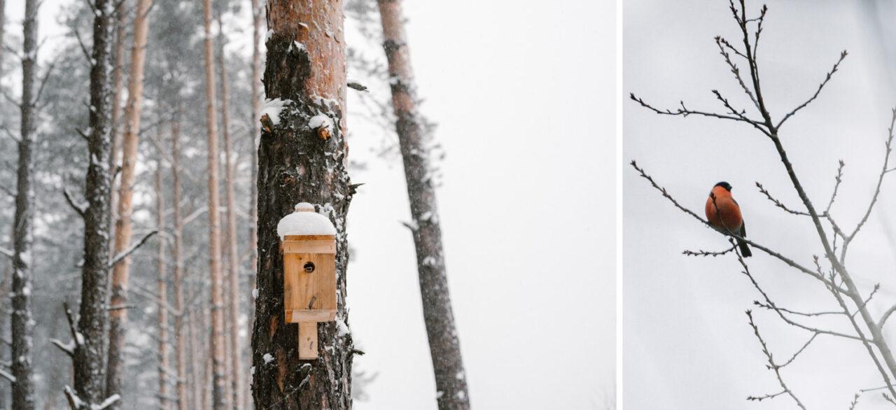 budka dla ptaków wisząca na drzewie i gil