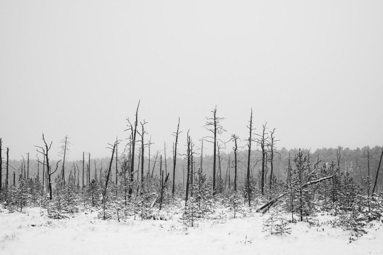 zimowy krajobraz bagienny