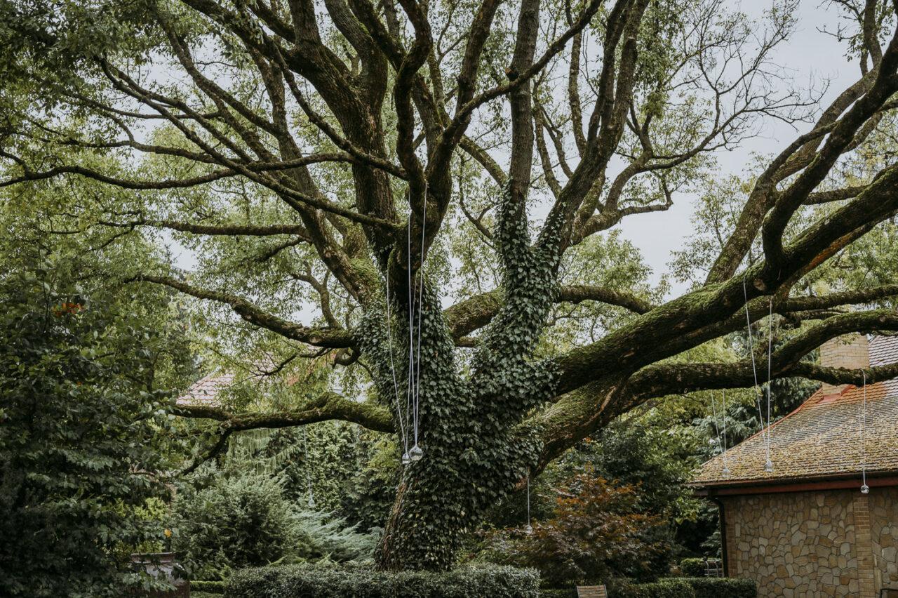 okazałe drzewo hotelu Kmicic