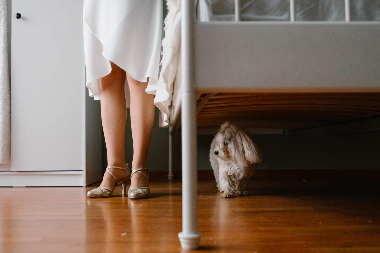 pies maltańczyk i stopy kobiety